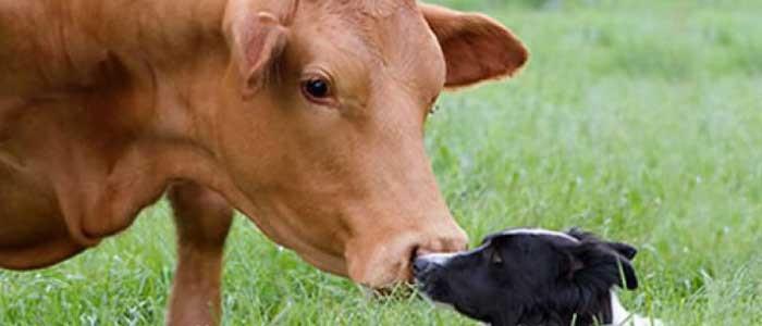 Epidemiologia en los animales