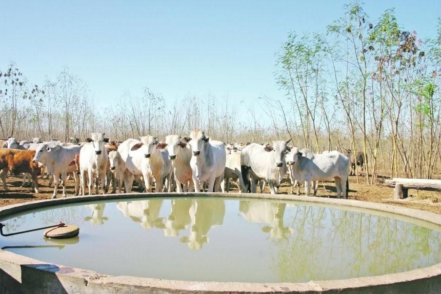 Salud animal y calidad de agua