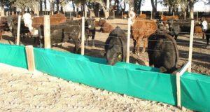 comederos-y-bebederos-para-ganado-pollos-borregos-agro-campo-D_NQ_NP_16535-MLA20121925575_072014-F