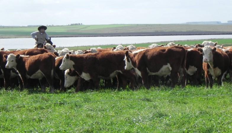 Recomendaciones para realizar el estacionamiento de servicio en bovinos